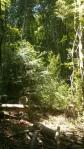 Diversificació de boscos vells a Santa Fe del Montseny