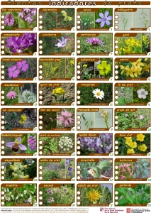 Guia_Plantes_indicadoresv3